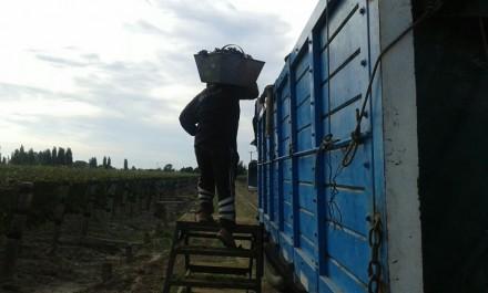 La dinámica del capital en el complejo vitivinícola mendocino