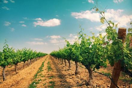 Vitivinicultura y cambio climático: herramientas para la gestión local