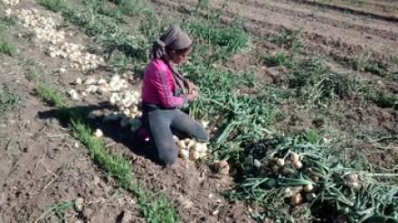 """Trabajo infantil y rendimiento académico: el Programa """"Buena Cosecha"""" en Mendoza"""