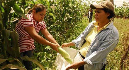 La política agraria como política social