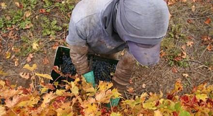 Políticas de formación y empleo para los jóvenes en la vitivinicultura mendocina. El caso del Departamento de Maipú.