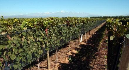 Inserción laboral de mujeres de distintas generaciones en la vitivinicultura