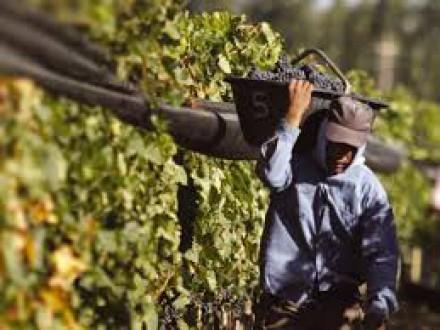Concentración económica en el circuito productivo vitivinícola en Mendoza